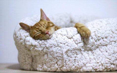 The Value of Sleep