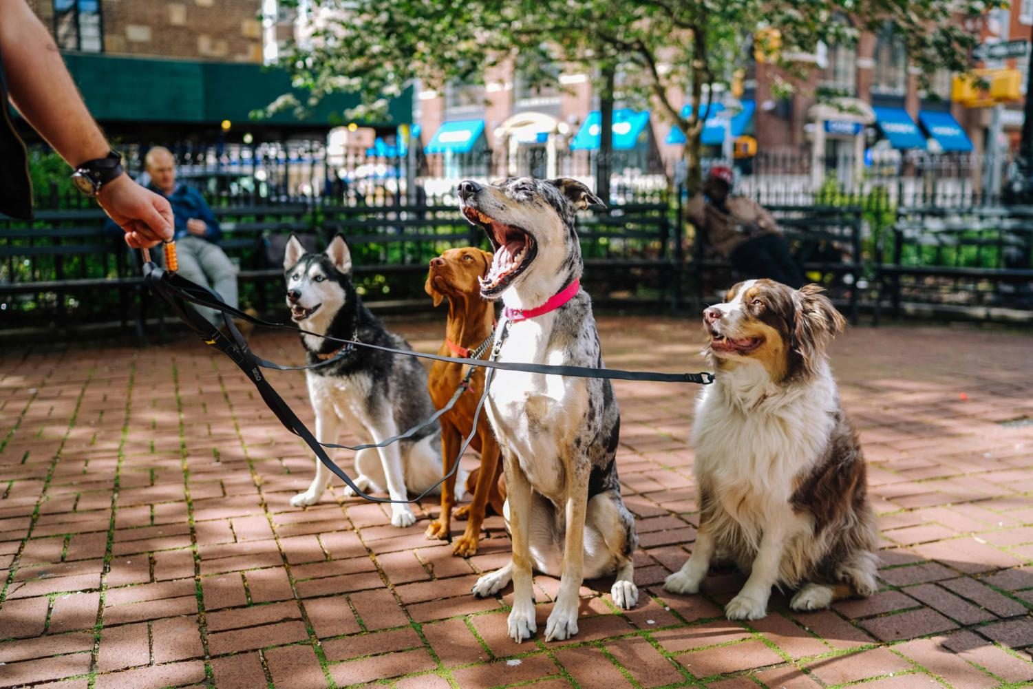 Dogs are some of the animals that need the most help through animal rescue organizations.