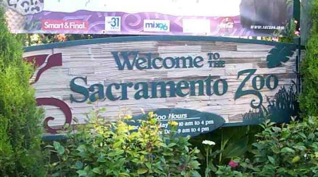 The+Sacramento+Zoo+isn%27t+just+for+children%21