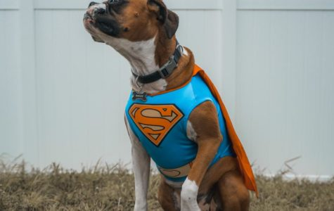 Pet parade and costume contest October 3 at the Farmers' Market