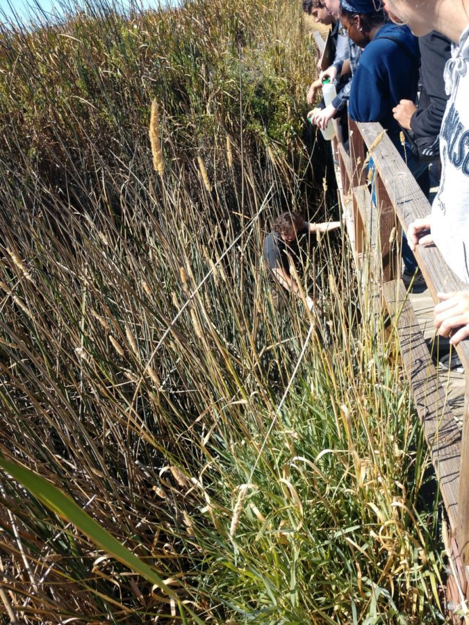 ESS students watch Alex Padgett (Senior) wade through the marsh, collecting water for testing.