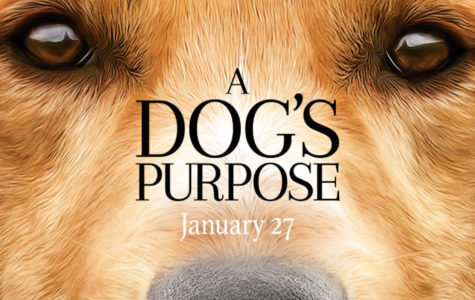 DVD review: A tear jerker about a dedicated dog
