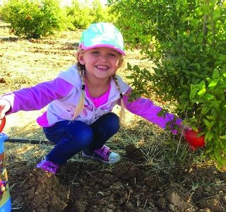 Pick Your Own Pomegranates Oct.19-20