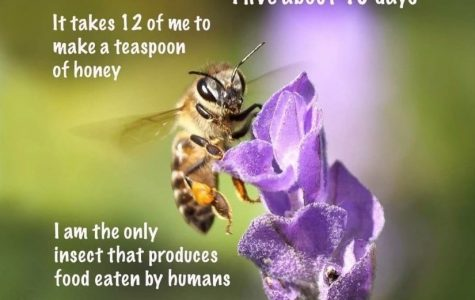 The plight of the honey bees
