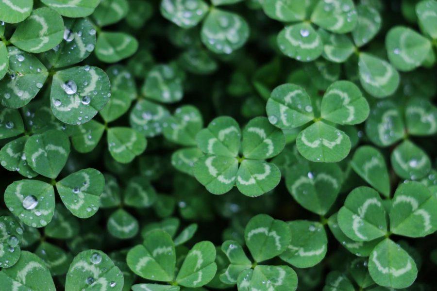 Pinch me, Im Irish.