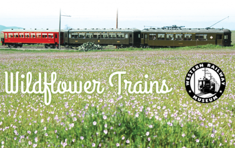 Scenic Wildflower Train in Suisun March.28.-April.29
