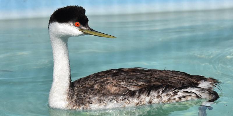 The+International+Bird+Rescue%27s+Open+House+Tour+in+San+Francisco