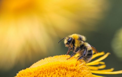 Little bees have big impacts on our food supplies around the world.