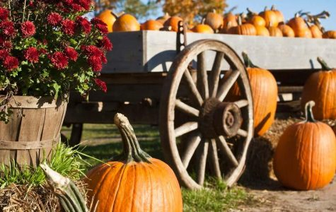 Local family events to get into the Halloween spirit