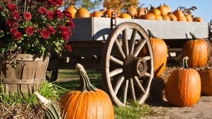Local+family+events+to+get+into+the+Halloween+spirit
