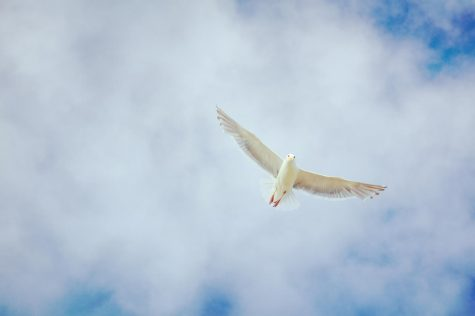 A very common bird that is used to symbolize peace is the dove.