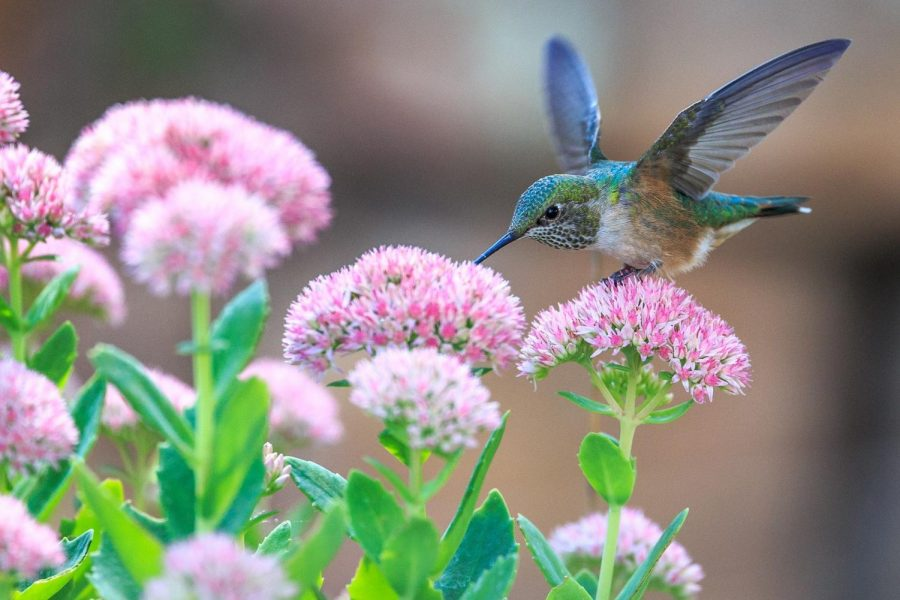 Invite birds into your home garden with a few choice plants.