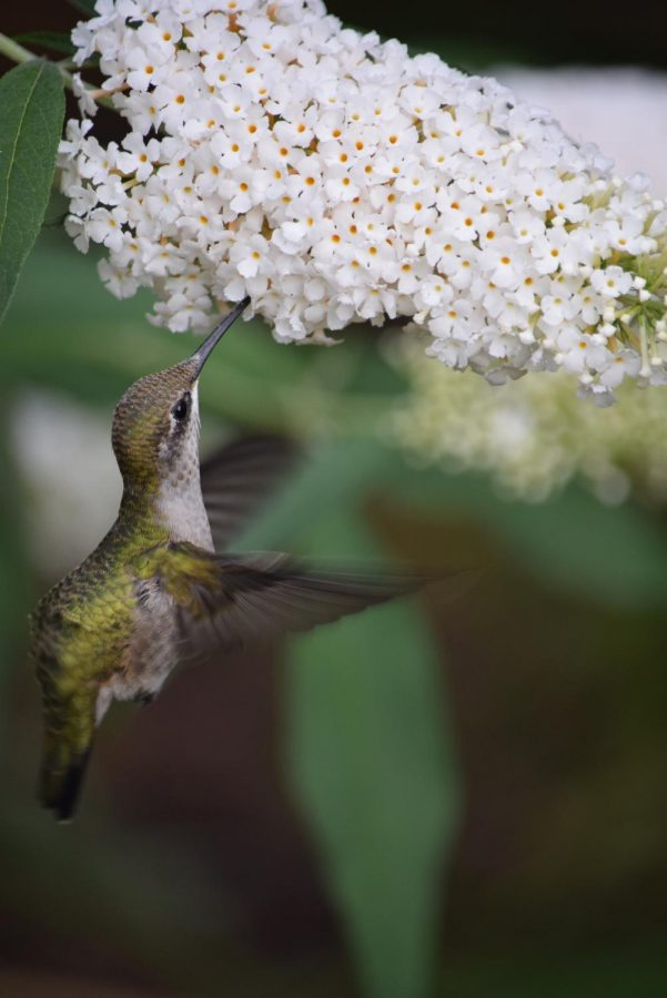 While not all birds can fly, this story goes into the science of how birds are able to fly.