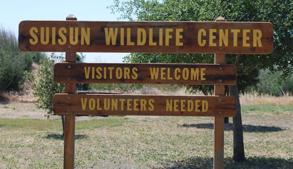 The Suisun Wildlife Center is always open for taking rescues and to book an educational tour.