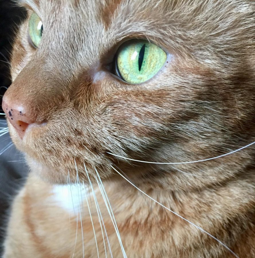 If people are unavailable, go ahead and kiss a lovable ginger cat.