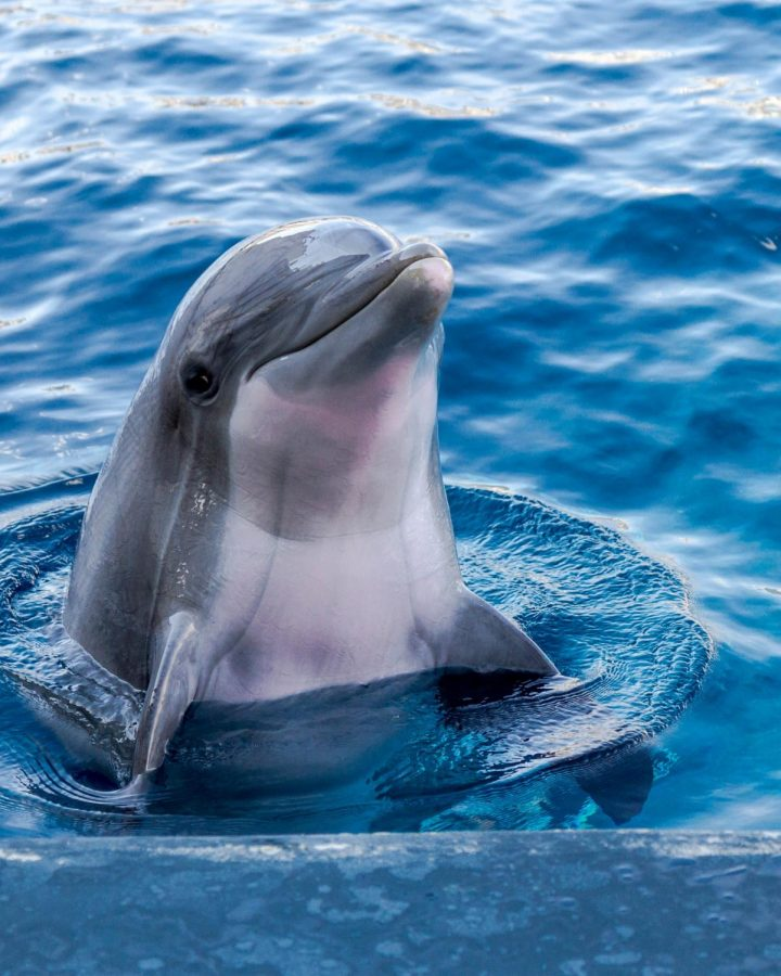 Dolphins are intelligent and talented.