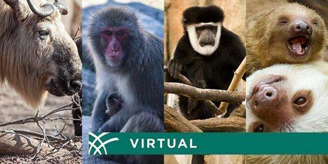 Lincoln Zoo Park: Virtual Animal Experiences - June 12