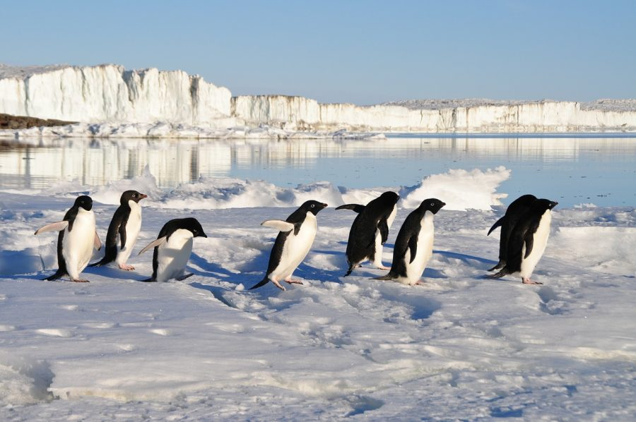 Penguins bring us joy and laughter.