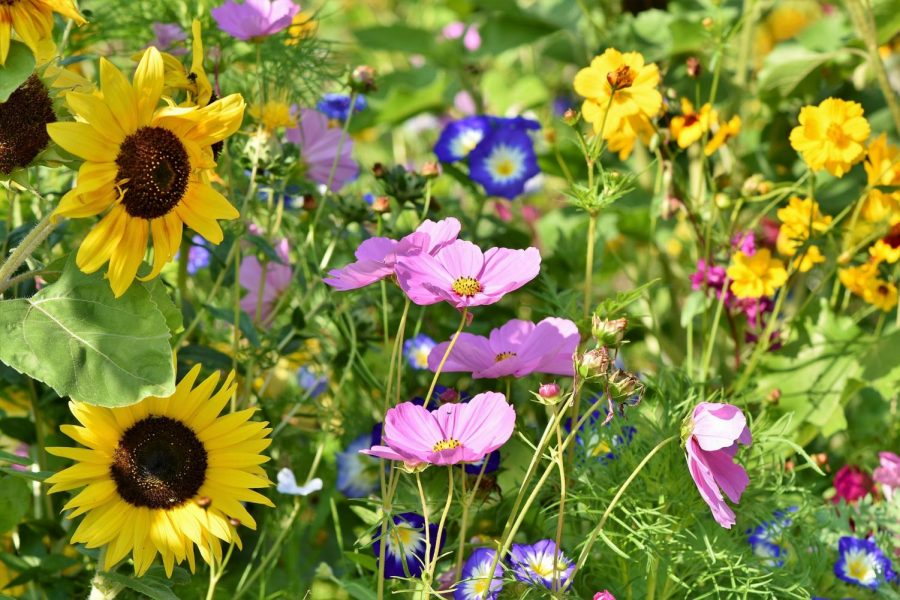 A world of color and scent can be found in a field.