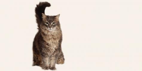 Animal Rescue Foundation Virtual Cat Care Presentation - July 14