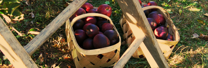 Farm to Table: Pick your Own Apples at these Farms