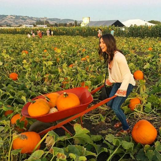 Fall Fun at these Pumpkin Patches and Corn Mazes